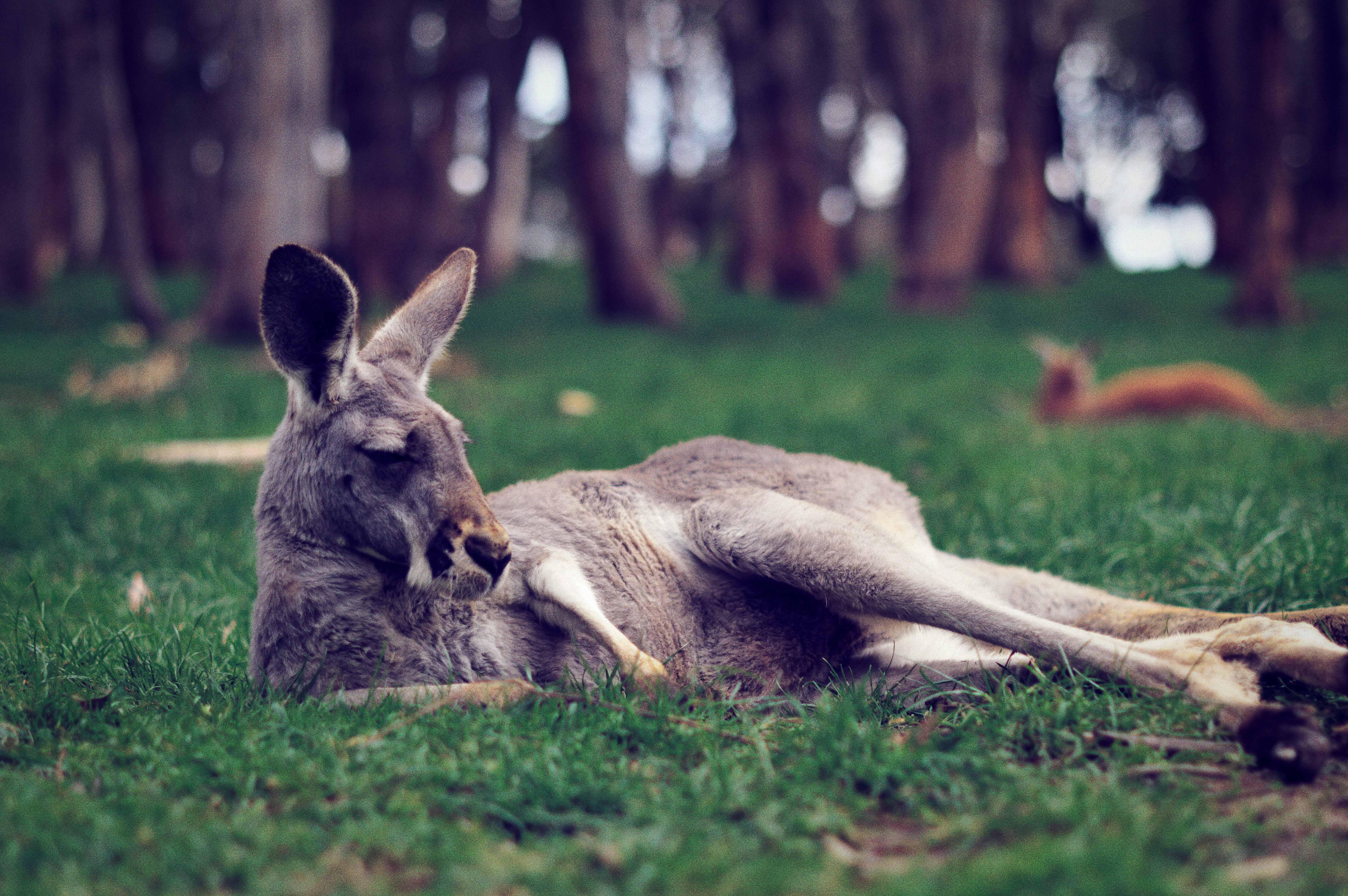 AAAAH! We gaan naar Australië, again!